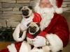 Pet Portrait With Santa